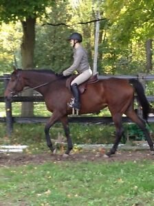 Looking for a tall Reg Quarter horse stallion to breed to