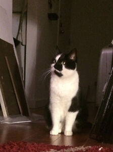 Lost black and white female cat