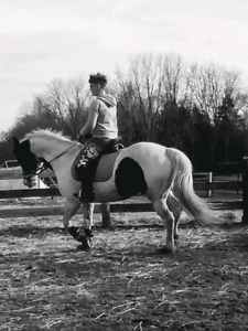 9yr old paint mare