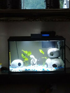 Fish tank with all the fixins 10G