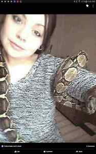 Columbian Red tail boa for sale!!!! 250 obo!,, Windsor Region Ontario image 2