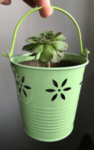 Beautiful Succulent plants for sale