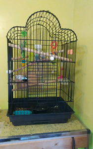 Large Parrot Cage- 6 budgies + Accessories! !
