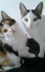2 sisters-free to good home