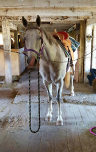 QH mare for sale