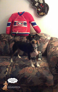 SINCE 2010 **Small Breed Dog Playdates,Sleepovers (No Cages)** West Island Greater Montréal image 4