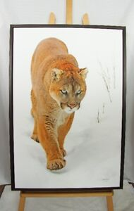 """Cougar"". Framed Giclee Photograph Print on canvas."