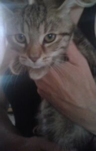 4 Month old Female kittens to great homes