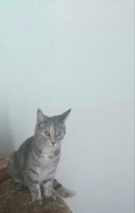 LOST CAT MUST BE FOUND!!  PLEASE HELP