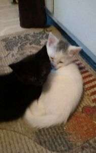 Looking to find homes for 2 Young cats