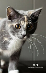 Greater Edmonton Animal Rescue Society - Tora up for Adoption!