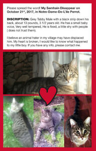 Lost Male Tabby Cat