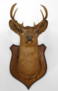 Wanted any type of free or cheap  Taxidermy items for decoration