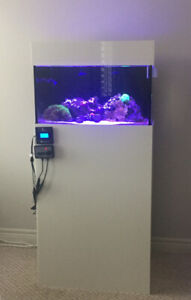 Nano reef 20 gallon aquarium setup