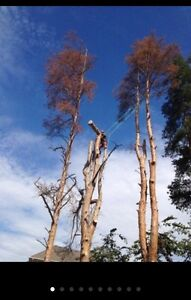 Ash tree removal ! Dangerous trees ? Call etree Oakville / Halton Region Toronto (GTA) image 2