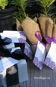 Tree Seedlings for Weddings, Earth Day, Birthdays, Promotions Downtown-West End Greater Vancouver Area image 6