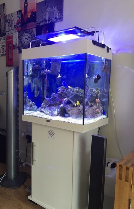 juwel lido 120 fish aquarium fish tank in exeter devon. Black Bedroom Furniture Sets. Home Design Ideas