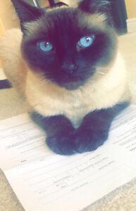 LOST CAT, Coco