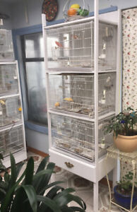 Set of birds cages and stand