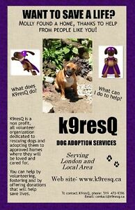 DOGS FOR ADOPTION... FOSTER HOMES NEEDED IN LONDON