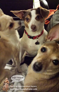 *HOLIDAYS FULL* CAGE-FREE BOARDING SMALL DOGS IN HOME OF TRAINER West Island Greater Montréal image 8