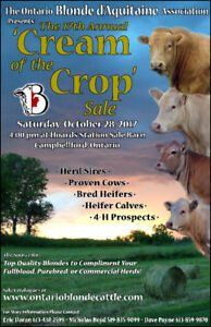 Cream of the Crop Blonde Cattle Sale