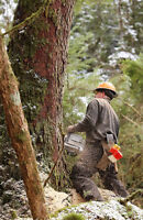 Experienced Forestry Cutter