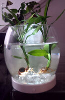Beautiful Beta Fish, Plant Aquarium Tank, + EXTRAS!!!