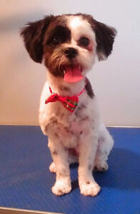 Dog Grooming in Tavistock Stratford Kitchener Area image 8