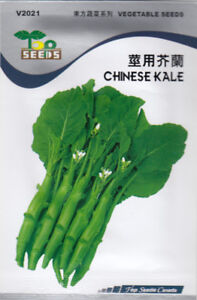 Chinese Kale Seeds for SALE!  Qty 1,000 Seeds.  Free Shipping