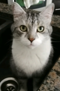 Wanted-lost cat Orleans