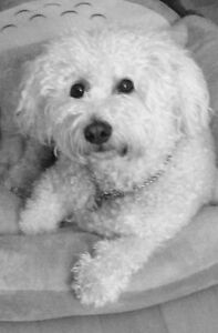 Garderie Familiale sans cage Pour petits chiens Boucherville