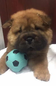 The Top Dog Store - SPECIAL PUPPIES, SPECIAL PRICES!!