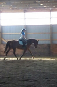 Horseback Riding lessons Available! Windsor Region Ontario image 3