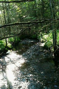 50+ Acres of Woods Land with Camp on  Gaspereau Mountain
