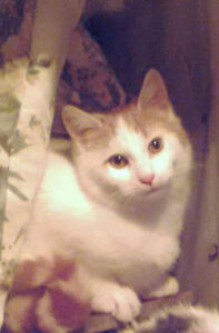 Beautiful 5 month old Kitty's Need A Home