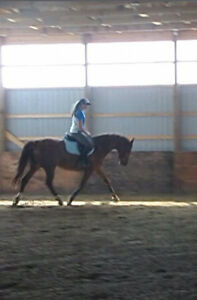 Horseback Riding lessons Available! Windsor Region Ontario image 2