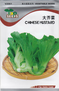 Chinese Mustard Seeds for SALE!  FREE SHIPPING
