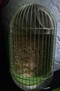 Guinea Pig/Hedgehog Cage