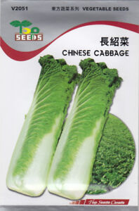 Chinese Cabbage Seeds FOR SALE!  FREE SHIPPING