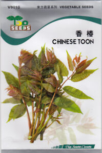 Chinese Toon (Fragrant Spring) Seeds for SALE!  Free Shipping