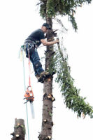 Gerrys Cheapest Tree Removal same day services
