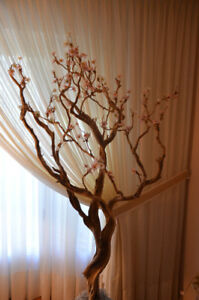 two manzanita trees for sale (6 ft tall each)