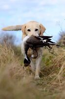 Youth waterfowl expo