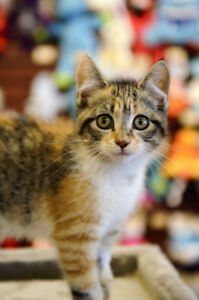 Kittens available at Pet Valu Thorold