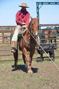 Great Ranch Roping Horse