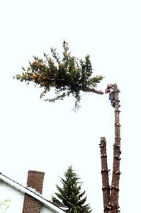 GERRY'S  CHEAPEST TREE REMOVAL 6AM TO 9PM 7 DAYS A WEEK