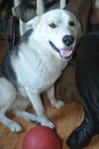 SWEETEST HUSKY YOULL EVER MEET