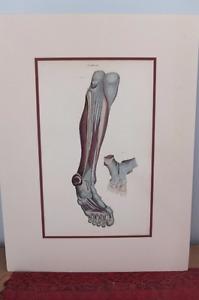 Gravures anatomiques W.H. Lizars (1835)