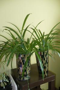 Plantes int - ext - artificielles